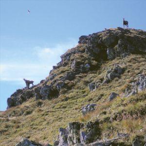 2/2007 - Krajobraz górski / Mountain Landscape