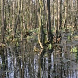2/2008 - Udział wody w krajobrazie / Participation of Water in the Landscape