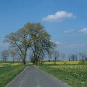 1/2007 - Drzewo - żywy elelment przestrzeni / A Tree - Live Element of Space